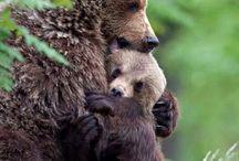 Bears / by Feronia Parker-Thomas