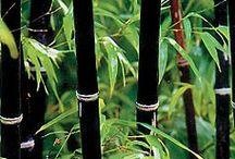 Bamboo / Bamboo / by Karen Meyer