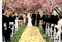 Dream Wedding / by Renae Miner