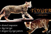 Kattenras - toyger / by Jessica Goedhart