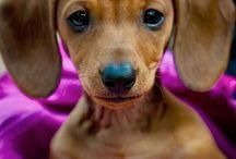 wiener dogs / by Elisabeth Etchell