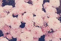 Floral / by Samantha Crawford