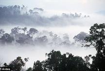 Borneo / by Rosa Lopez de Gomara