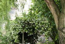 Garden Inspiration / by Cedar Valley Arboretum