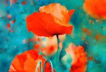 ~Poppy poppy I love you~ / by Midori Chan