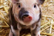 Mini Pigs / by Nikki Basil