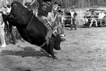 Bull Riding, PBR & others / by Cheryl Wolfenbarger