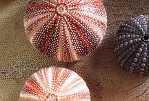 shells & sea glass  includes decorating & crafts / by Anne Baker