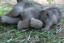 Elephants / by Stephanie Woodland