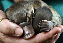 cute animals / by Gina Wilhelm