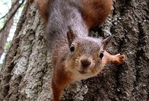 Squirrels! / Because it's not Squirrel Hill without of favorite fluffy tailed friends! / by Squirrel Hill Magazine