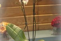 Mis plantas favoritas!!! / by Reyna