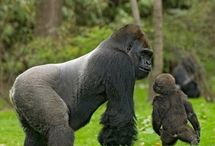 Our Gorillas / by 3gorillas