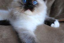 CATS / by elisabet nielsen