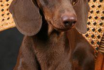Dogs / by michelle sullivan
