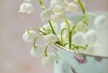 Photography : Flowers  / by tenthousandthspoon     Jaclyn
