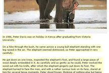 Elephants for days / by Katelyn Albright