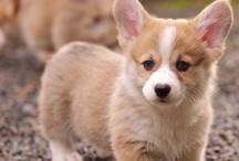 Puppy Love / by Trez La Londe