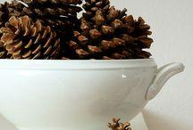 Pinecones / by Jennifer Baggerly- Milligan