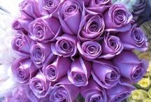 Purple / by Robin Watson