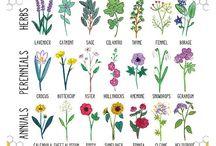 Garden grow..love..be / by Dawn York