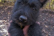 Dog my little bailey and my westies  / by Tanya Hernandez