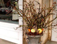 Fall Decorating / by Kelly McHugh