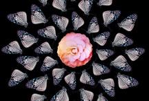 iPhoneography / by Cara Gallardo Weil