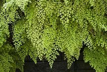 Plants / by Kathy Dietkus