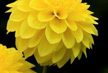 Color board Yellow / by Hilary Walker