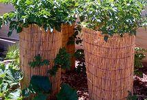 Organic Backyard Ideas / by Stacy Dimeck