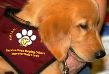Service Dogs / Service Dogs / by Pawsitive Autism Service Dog Solutions