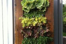 Succulents & Garden / by Erin Ferree