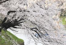 Spring Beauty / by Cyndi Orsburn