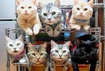 Cats and Cat Stuff I Love / Love them kitties.  All sizes, all colors, all temperaments. / by Sandy Kemp Ⓥ