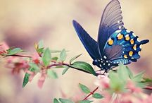 Nature- Butterflies and Rainbows!!  :) / by Dyan Strand
