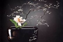 2) Ikebana / by Clarisse Peres