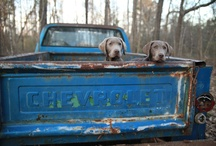 Bo and Stormy / by Christy Bennett