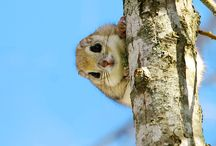 Cute Animals / by Kristinas Pinterest