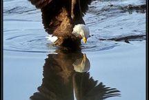 Eagles  / by Janie Hansard