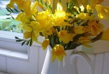 Cendrine & Sandy / Yellow daffodils and fresh spring green @Shenley / by Platinum Raspberry