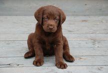 Puppies!!!! / by Austen Williams