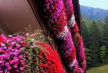 flowers / by Akemi Shoomy Taku