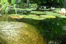 Water Gardening / by Backyard Gardener