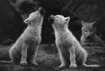 animals / by Cari Euritt-Scott