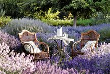 """Cottage on """"Lavender"""" Lane / Come along and enjoy the walk down charming Lavender Lane. With it's rustic cottages, surrounded by lavender fields and other pretties of life in the country. / by Michelle Sousa"""