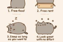 Cat Stuff / by linda markwell