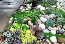 Landscape Enhancement  / by Red Lotus Gardening Co.