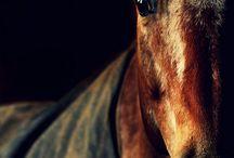 Horses / by Lala Maks