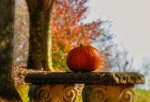 Fall/Autumn / by Matthew Eytzen